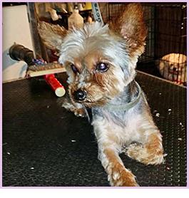 Dog Breeder   Pensacola, FL - Puppy Love Play and Grow