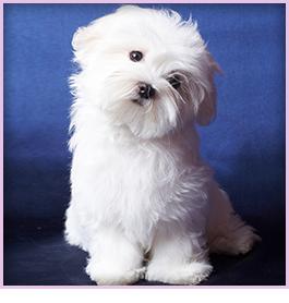 Dog Breeder | Pensacola, FL - Puppy Love Play and Grow