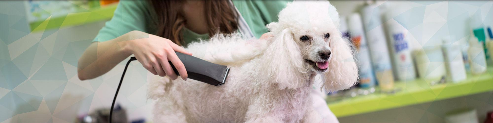 Dog Grooming | Pensacola, FL